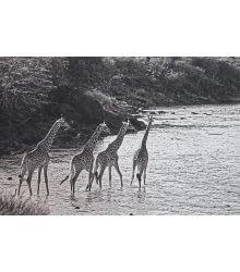 Travessia, Maasai Mara National Reserve, Kenya, da série Almas Livres